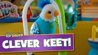 getlinkyoutube.com-Little Live Pets Clever Keet from Moose Toys at Sweet Suite 2015!