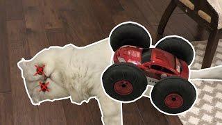 getlinkyoutube.com-OUR CAT GOT HIT BY A CAR!!!!