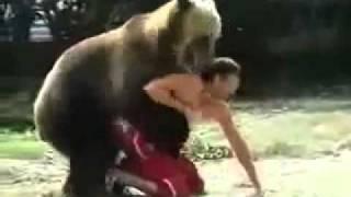 Добрый медведь! Просто играет!