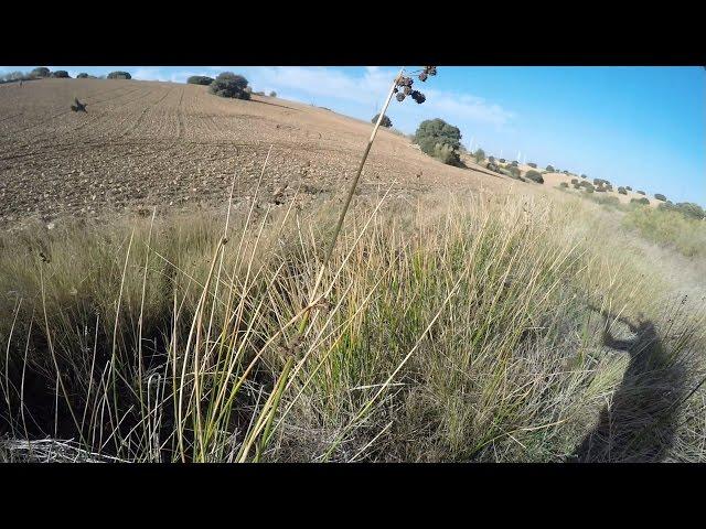 Unos momentos de caza en La Mancha 2014