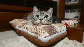 猫の嬉しいときのお返事 3