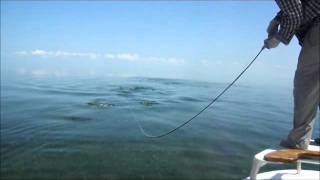 Awesome Tarpon Hook-up on Fly