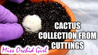 Starting a Cactus collection from cuttings