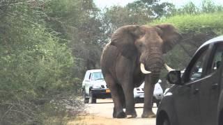 getlinkyoutube.com-Too Close to Elephant at the Kruger Park