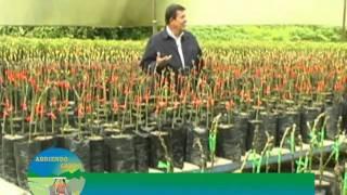 getlinkyoutube.com-Cultivo y comercialización del aguacate en clima cálido - Excelencia Empresarial Ganadería