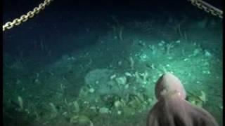 getlinkyoutube.com-Descubiertas en el fondo del mar