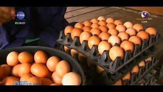 getlinkyoutube.com-เกษตรทำเงิน : ไก่ไข่ออร์แกนิก เลี้ยงหลังบ้านต้นทุนต่ำ