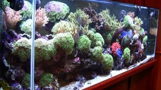 getlinkyoutube.com-The Wonder of the Aquarium Store - Just video of Salt Water Fish and Corals