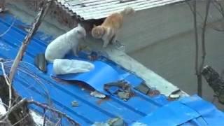 Кошачьи разборки на крыше