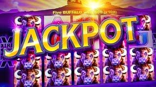 getlinkyoutube.com-HUGE BUFFALO JACKPOT !!!  5c Aristocrat Video Slots - San Manuel Buffalo