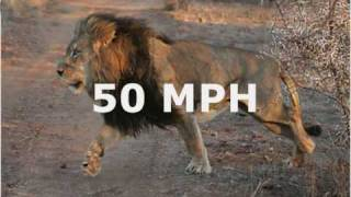 getlinkyoutube.com-Top 20 Fastest Land Animals