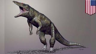 Ogromny, chodzący na dwóch łapach krokodyl zamieszkiwał bagna w Północnej Karolinie