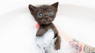 Rescued Kittens Rapping