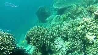 getlinkyoutube.com-SJCAM SJ5000+ Review part3 - Video Test of the sky & land & underwater