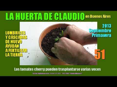 Cultivo del tomate Cherry 2013 - Secretos del huevo para la tierra - Abono de huevos