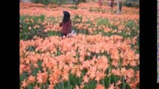 getlinkyoutube.com-miris ! Taman bunga langka di yogyakarta gunung kidul ini hancur diinjak pengunjung foto selfie,