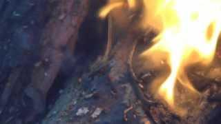 getlinkyoutube.com-Капа раковый нарост на деревьях отжиг