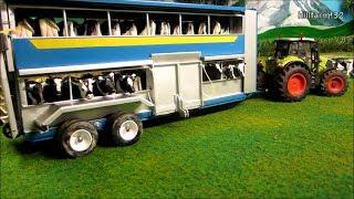 getlinkyoutube.com-RC TRACTORS transported HAPPY COWS - farm toy fun