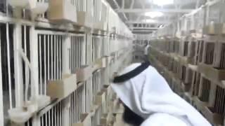 getlinkyoutube.com-زيارة الوفت السعودي لمركز بومجبل للحمام الزاجل