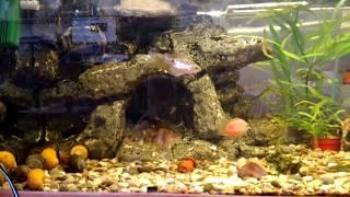 getlinkyoutube.com-Мой аквариум (Aquarium) 100 литров