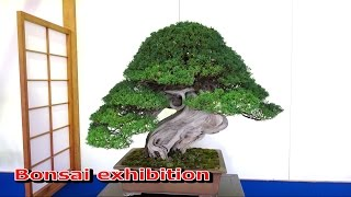 getlinkyoutube.com-日本盆栽逸品展/Bonsai exhibition
