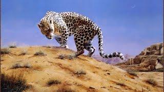 getlinkyoutube.com-النمر العربي في جبال طويق Arabian leopard