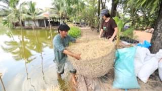 getlinkyoutube.com-บันทึกลุยทุ่ง ตอน สร้างแพลงก์ตอนให้ปลากินพืช
