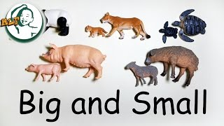 getlinkyoutube.com-Learn sizes,  big and small with baby animals