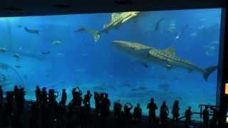 getlinkyoutube.com-沖縄美ら海水族館(Okinawa Churaumi Aquarium)20130831 CANON SX280 HS