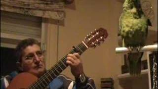 getlinkyoutube.com-loro cantando flamenco,cante de origen gallego