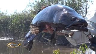 getlinkyoutube.com-Incrível pescaria de Trairões com Tuviras - bloco 02
