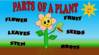 getlinkyoutube.com-PARTS OF A PLANT FOR KIDS, PARTES DE PLANTA EN INGLES PARA NIÑOS