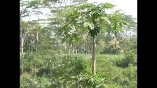 getlinkyoutube.com-PROFIL DESA TOGA- Desa Ngunut Desa Toga