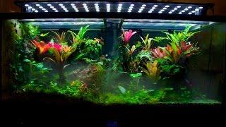 getlinkyoutube.com-Display Vivarium tour and tips to grow a thriving tank