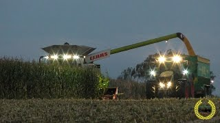 getlinkyoutube.com-Claas Lexion 780 I 12 Reihen I Maisdreschen 2016 I Corn Harvest I corn threshing I Trebbiatura mais