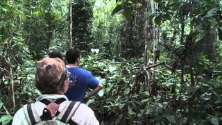 getlinkyoutube.com-Mikongo Forest, gorilla trek, Lope National Park, Gabon