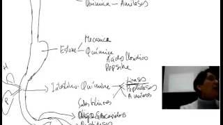 getlinkyoutube.com-Fisiología del aparato digestivo. Introducción (1)