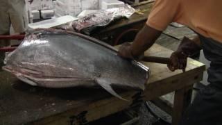 getlinkyoutube.com-Tsukiji Fish Cleaning