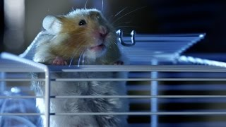 getlinkyoutube.com-Hamster's great escape | Pets - Wild at Heart: Episode 2 preview | BBC One