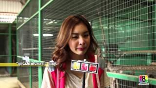 getlinkyoutube.com-อึ้ง ทึ่ง เสียว : บุกรังสัตว์ประหลาด 3/4 #ช่อง8 #thaich8