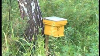 getlinkyoutube.com-Разведение пчел Карпатской породы. часть 2