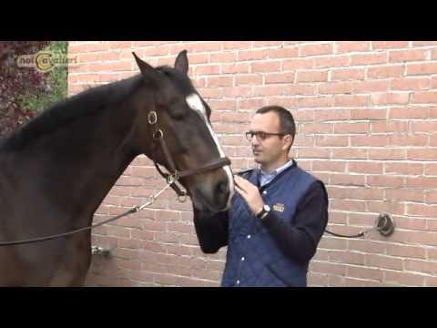 Come allevare un cavallo animali dal mondo - Avere un cavallo ...
