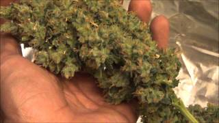getlinkyoutube.com-BIG FAT BUDS!!! SLH Harvest # 5 Marijuana Grow
