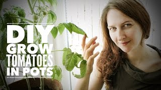 getlinkyoutube.com-Tomatoes: Growing Indoor Tomatoes Year Round - on How to Grow a Garden with Scarlett