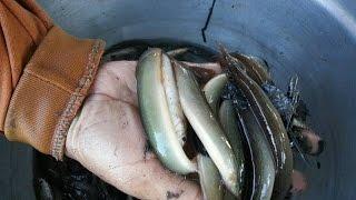 getlinkyoutube.com-หาปลาหลดมืออาชีพ โดยน้องวารินทร์