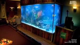 getlinkyoutube.com-Tanked: Aquarium Compilation