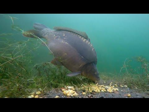Pontyokkal a víz alatt