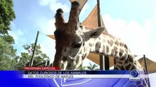 Programa Especial desde el Zoológico de Naples - 3er. Segmento