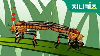 getlinkyoutube.com-곤충의 몸과 사랑이 궁금해요! 앞다리에 귀가 있는 곤충이 누구라고? 곤충대백과 | 지니키즈★생생도감