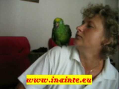 papagalul vorbitor